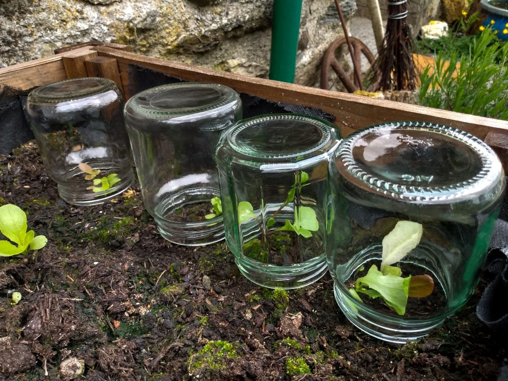 how to get rid of slugs jars