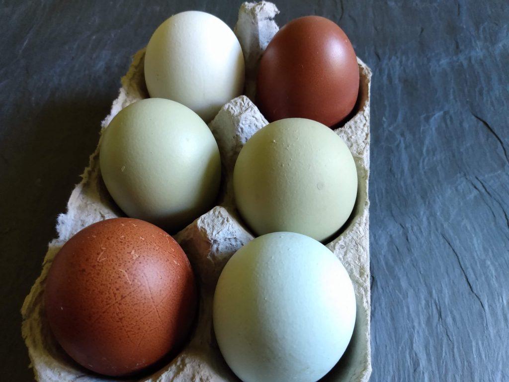 eggs local egg farmer