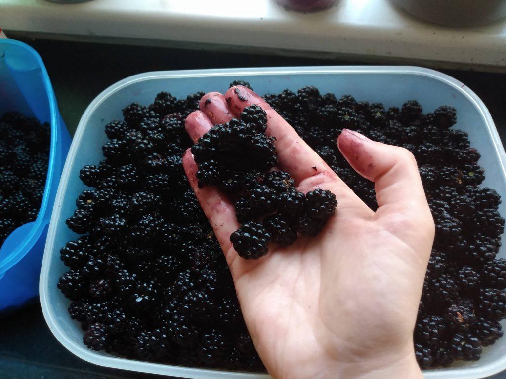 blackberries blackberry jam recipe
